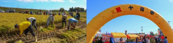 画像:稲の収穫/十日市