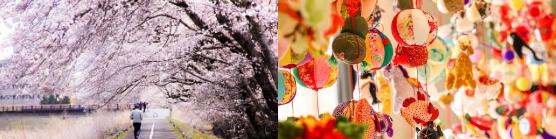 画像:請戸川リバーラインの桜/吊るし雛
